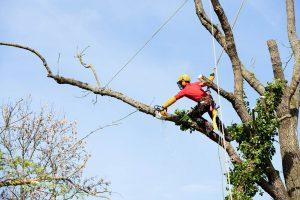 defrisari arbori cu alpinisti utilitari